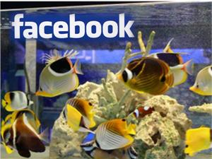 ひかるアクアリュームのフェイスブック