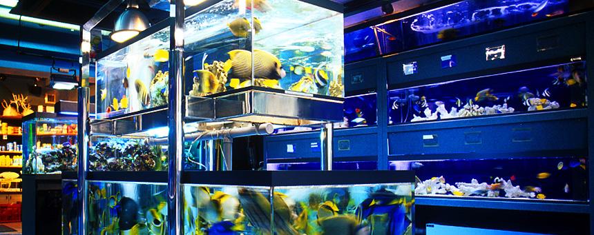 ショップ 海水 魚 海水魚・サンゴ・飼育用品の通販なら 大阪の海水魚ショップやどかり屋へ